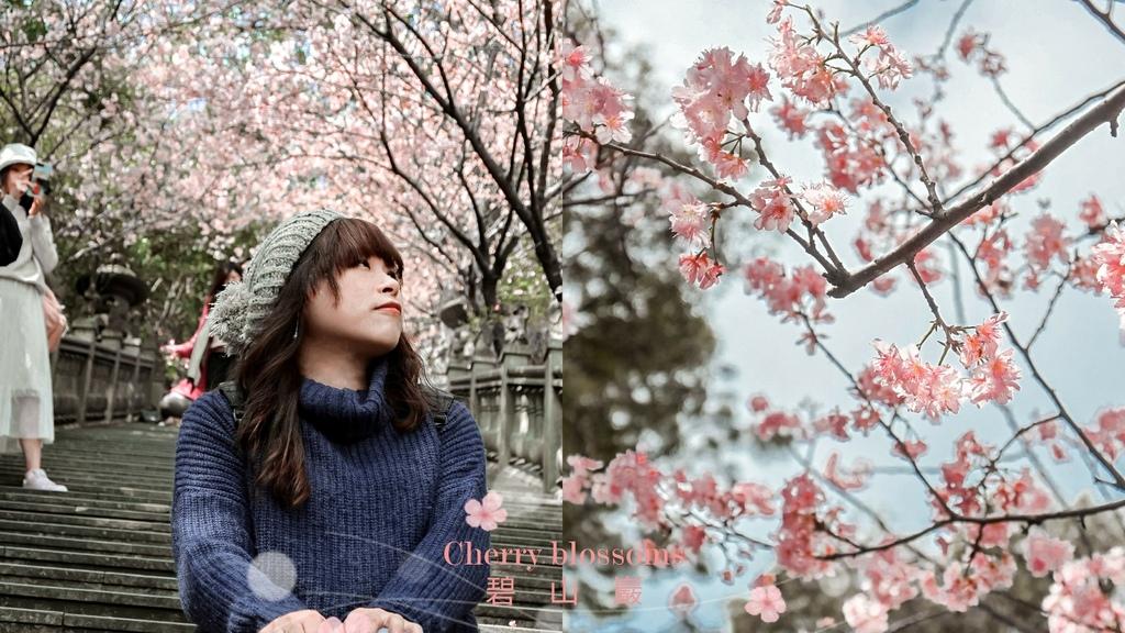 【台北賞櫻景點】內湖碧山巖:淡粉色椿寒櫻紛飛,像極了愛情。 @女子的休假計劃